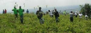 Tree planting Ngong