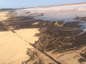 Scattering debris along beach